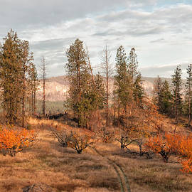 Allan Van Gasbeck - The Road Through the Orchard