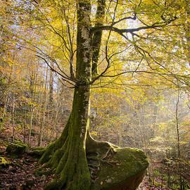 Sophie De Roumanie - The Rock Tree