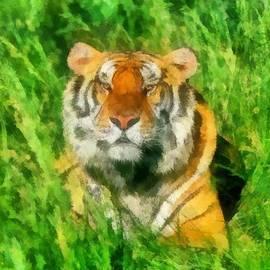Maciej Froncisz - The Royal Bengal Tiger