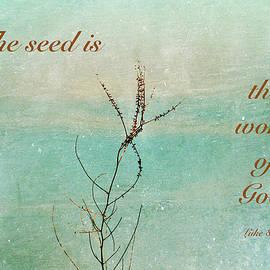Debbie Nobile - The Seed