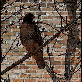 Bobbee Rickard - The Shadow