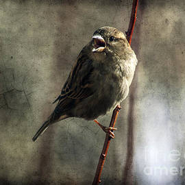 Janice Rae Pariza - The Singing Sparrow