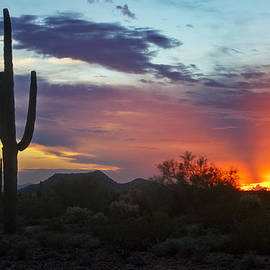 Saija  Lehtonen - The Sonoran Desert Aglow