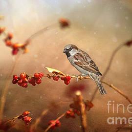 Darren Fisher - The Sparrow