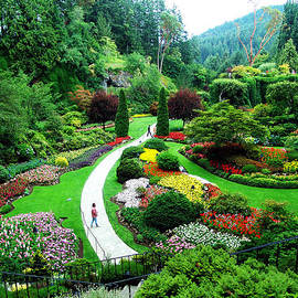 Janet Ashworth - The Sunken Garden