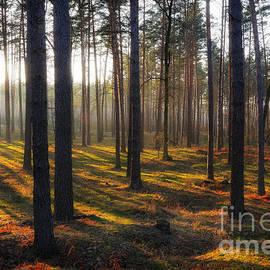 Igor Baranov - The sunny forest