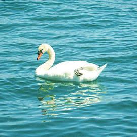 Shawn Dall - The Swan