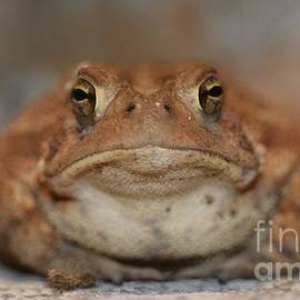 Jane McBride - The Tennessee Toad