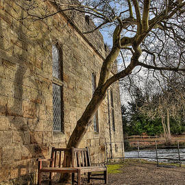 Darren Wilkes - The Thinking Tree