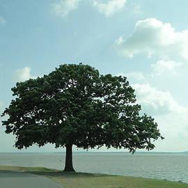 Carolyn Fletcher - The Tree