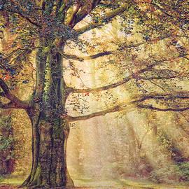 Lars Van de Goor - The Tree