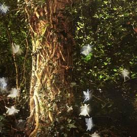 RC deWinter - The Tree of Dreams