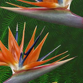 Ben and Raisa Gertsberg - The Tropics