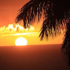 Karen Nicholson - The Tropics