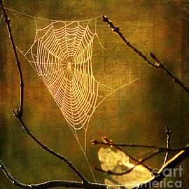 Darren Fisher - The Web We Weave