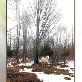 Patricia Keller - The White Stallion on a Snowless  Mound