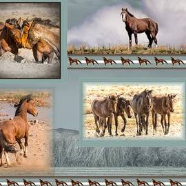 Janis Knight - The Wild Horses of Nevada