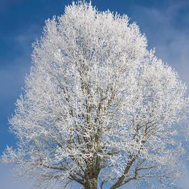John Haldane - The Winter Sentry