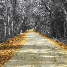 Sharon Woerner - The Yellow Dirt Road