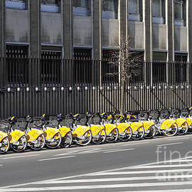 Mark Somogyi - The Yellow line