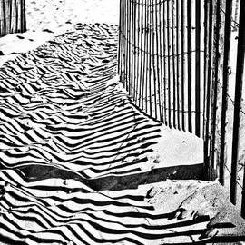 Colleen Kammerer - The Zebra Walk