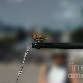 Michelle Meenawong - Thirsty Bird