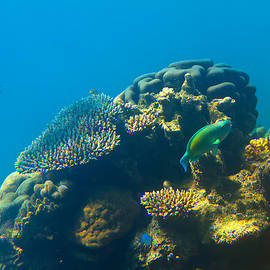 Mr Bennett Kent - This is why they call it the GREAT Barrier Reef
