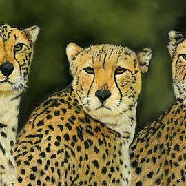 Sarah Dowson - Three Cheetahs