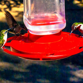 Bob and Nadine Johnston - Three Humming Birds in Arizona