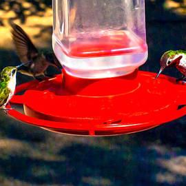 Bob and Nadine Johnston - Three Humming Birds in Arizona