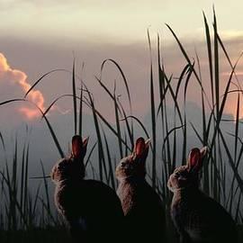 Schwartz - Three Rabbits in the Setting Sun