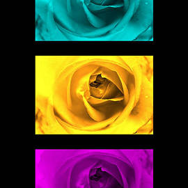 Julia Fine Art And Photography - Three Roses