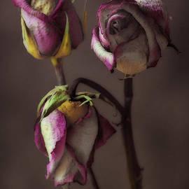 Deena Athans - Three Roses Three