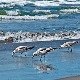 Valerie Garner - Three Seagulls At Ocean Shore Eating