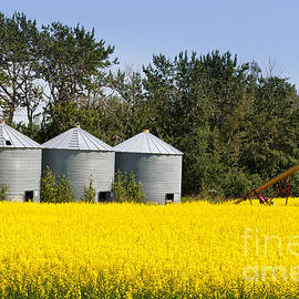 Stephan Pietzko - Three silos canola rapeseed agriculture field