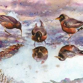 Anne Gifford - Three Thirsty Robins