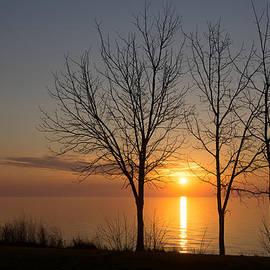 Georgia Mizuleva - Three Trees and the Sun