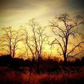 Joyce Kimble Smith - Three Trees