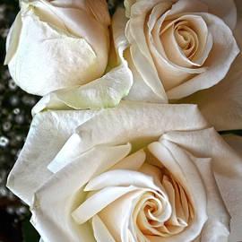 Sandi OReilly - Three White Roses