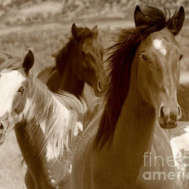 Jerry Cowart - Three Wild Horses Grazing On Navajo Indian Reservation