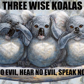 David Clode - Three Wise Koalas with text