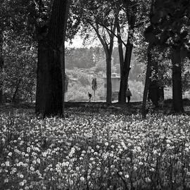 Zeljko Dozet - Through the Dandelions