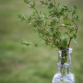 Scott Thorp - Thyme in a Bottle