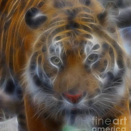 Gary Gingrich Galleries - Tiger-5316-Fractal