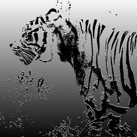 Chris Smith - Tiger illustration design