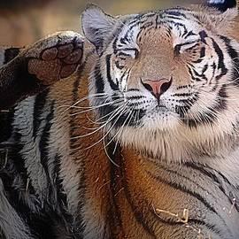 Ernestine Manowarda - Tiger Kiss Me