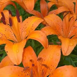 Jennifer E Doll - Tiger Lilies
