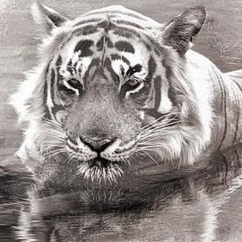 Manjot Singh Sachdeva - Tiger Love Water