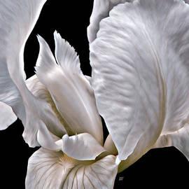 Barbara St Jean - Tiger Striped Iris Heart
