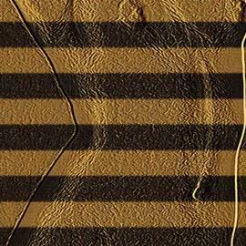 Piety Dsilva - Tiger Waves
